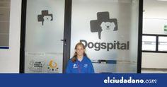 #Los perros podrán visitar a sus dueños en el hospital de Ibiza - elciudadano.com: elciudadano.com Los perros podrán visitar a sus dueños…