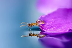 Ant-Pictures-Taken-by-Japanese-girl-Miki-Asai-2
