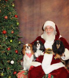 Dear Santa we've been good!….well sometimes!  Freddy, Holley and Bella!  CKCS