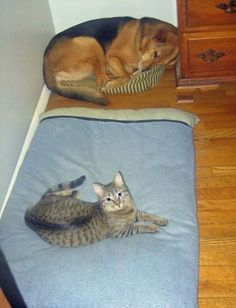 A cat laying on a dog bed, and a dog laying on a cat bed!! Haha!!
