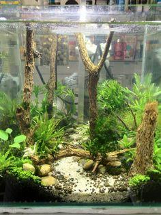 91 best tank inspiration images fish tanks aquarium design pisces rh pinterest com