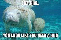 My last paper at Oberlin College will be brought to you by Calming Manatee.
