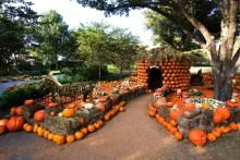 Pumpkin magic during October at Dallas Arboretum - more fun and great photo opps
