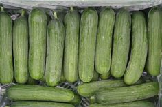 Zelf komkommer kweken in 5 stappen - Buitenlevengevoel.nl Garden Plants, Cucumber, Fruits And Veggies, Loosing Weight, Recipes, Zucchini