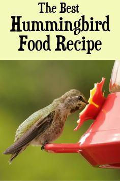 Hummingbird Feeder Recipe, Make Hummingbird Food, Hummingbird Nectar, Hummingbird Plants, Avocado Seed, How To Attract Hummingbirds, Humming Bird Feeders, Backyard Birds, Humming Bird Nectar Recipe