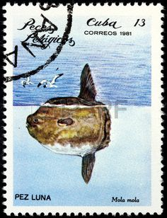 Ocean Sunfish or Common Mola (Mola mola), stamp printed by CUBA circa 1981