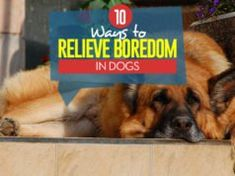 10 Ways to Relieve Boredom in Dogs Home Remedies For Fleas, Flea Remedies, Flea Shampoo For Dogs, Dog Shampoo, Cat Care Tips, Dog Care, Pet Tips, Dog Grooming Salons, Dog Grooming Business