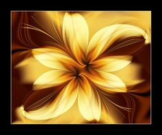 Lilly Fractal
