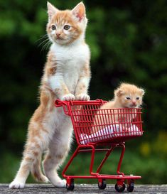 Running out of cat food - your daily dose of funny cats - cute kittens - pet memes - pets in clothes - kitty breeds - sweet animal pictures - perfect photos for cat moms Baby Animals Pictures, Cute Baby Animals, Funny Animals, Wild Animals, Animal Babies, Animals Dog, Animal Pics, Smart Animals, Funniest Animals