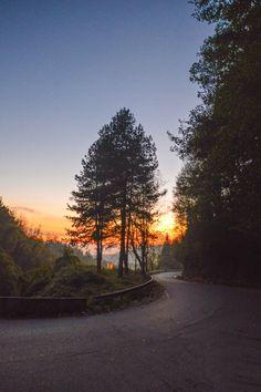 alberi gorgia - alberi mentre cala il sole