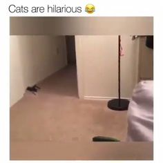 --> Link in description to for a very special cable management solution. Funny Animal Memes, Cute Funny Animals, Funny Animal Pictures, Cute Baby Animals, Cat Memes, Funny Cute, Cute Cats, Hilarious, I Love Cats