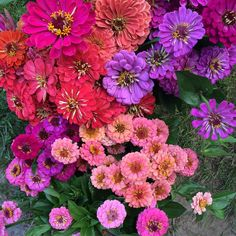 July Flowers, Summer Special, Hello Summer, Warm Weather, Special Events, Colours, Places, Instagram Posts, Garden
