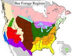 BEE FORAGE INFO     The 14 regions of the Ayers and Harman honey bee forage map are indicated below. These regions are based on natural patterns of land use and flora.