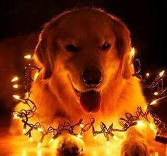 ... cansei de ser cachorro ... virei árvore de Natal ... kkkkkkkk .... beijinhos ♥