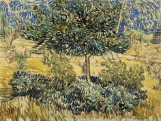 van Gogh, Vincent  Trees and Shrubs  1889