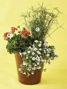 (A) Geranium (Pelargonium 'Scarlet Elite') : 1 (B) Petunia 'Supertunia Mini White': 2  (B) Umbrella Sedge ( Cyperus Alternifolius) : 1