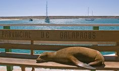 Flights from Guayaquil to Baltra Island - Google Search