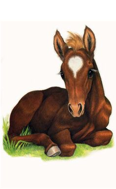 baby horse lying down - Google Search