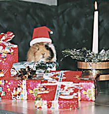 ... quieck, meine private Weihnachtsgala.