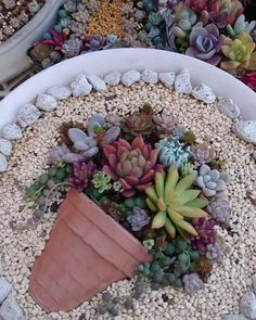 Inspiring Gnome Garden And Fairy Garden Design Ideas To Copy Right Now Succulent Landscaping, Succulent Gardening, Container Gardening Vegetables, Succulent Pots, Cacti And Succulents, Planting Succulents, Garden Pots, Backyard Landscaping, Succulents Online