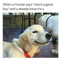 Funny Dogs Memes 28 Funniest Dog Memes - Best Viral Dog Jokes and Pictures - There's nothing a corgi can't fix. Cute Dog Memes, Dog Jokes, Funny Animal Memes, Cute Funny Animals, Funny Animal Pictures, Funny Cute, Funny Memes, Animal Pics, Memes Humor