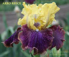 Iris ARRO REECE