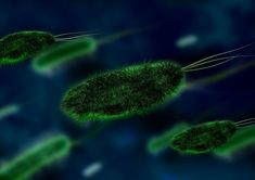 Probiotics: The Good Bugs Most people think bacteria are bad and associated only with disease. But there are many beneficial bacteria in our body. Yeast Infection Causes, Bacterial Infection, Dna E Rna, Home Remedies, Natural Remedies, Health Remedies, Peppermint Tea Benefits, 10 Interesting Facts, Heart Palpitations