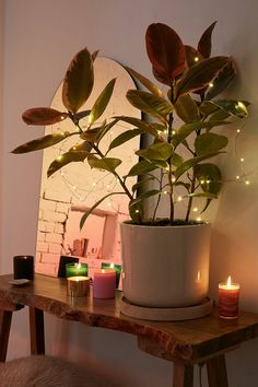Shop Firefly Battery Powered String Lights at Urban Outfitters today. We carry all the latest styles, colors and brands for you to choose from right here.
