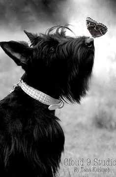 couleur en noir et blanc..