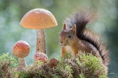 mushrooms bright by Geert Weggen on 500px