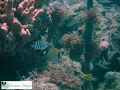 First Scuba Diving A