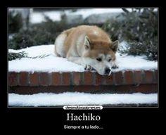 12 Ideas De Imagenes Siempre A Tu Lado Hachiko Hachiko Perro Hachiko