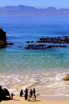 Cape Town, South Africa - beaches vacation LOVE MY COUNTRY!!!!