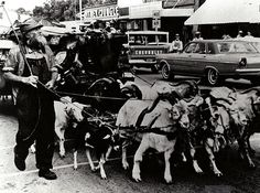 """Charles ""Ches"" McCartney, the legendary ""Goat Man"", was a wanderer, who spent decades traveling across the country while guiding a massive iron-wheeled wagon loaded with pots and pans, pails, bails of hay, car tags lead by a team of goats."" via The Goat Man"