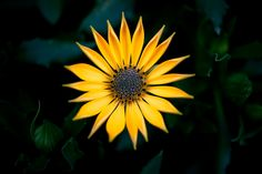 Photograph Golden Beauty by Susan  Chan  on 500px