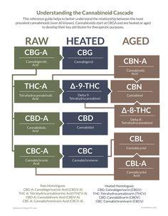 Cannabis Plant, Cannabis Oil, Thc Oil, Endocannabinoid System, Systems Biology, Thyroid Health, Neurotransmitters, Oil Benefits, Pharmacology
