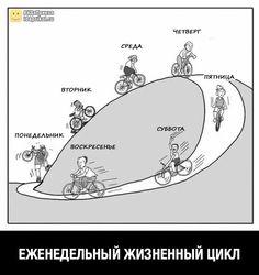 Еженедельный жизненный цикл
