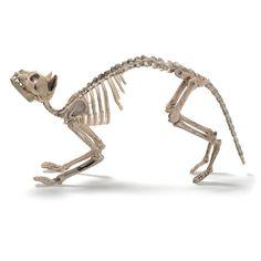 prextex cat skeleton best halloween decoration