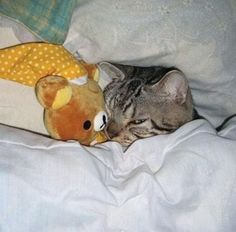 Very cute pictures of cats playing or sleeping with stuffed animals. Very cute pictures of cats playing or sleeping with stuffed animals. Funny Animal Pictures, Cute Funny Animals, Funny Cute, Cute Cats, Animal Pics, Hilarious, Animal Quotes, Animal Memes, Cat Quotes
