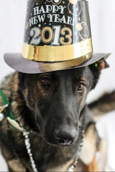 German Shepherd Holiday Dogs Happy New Year Puppy #NewYear Puppies Merry Christmas #2013