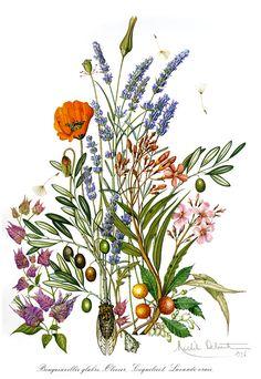 Herbier de France (часть 2) - Старый гербарий