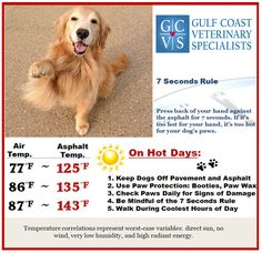 Summer. Is. Here.  Remember that a dog's paws are just as sensitive as our feet to the hot pavement and asphalt that is absolutely everywhere here in Houston. If it's too hot for your feet, it's too hot for their feet! ‪#‎safetyfirst‬ ‪#‎sohot‬ ‪#‎GCVS‬