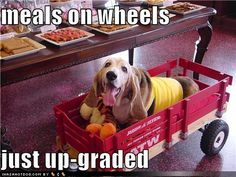 funny dog pictures meals on wheels  just up-graded