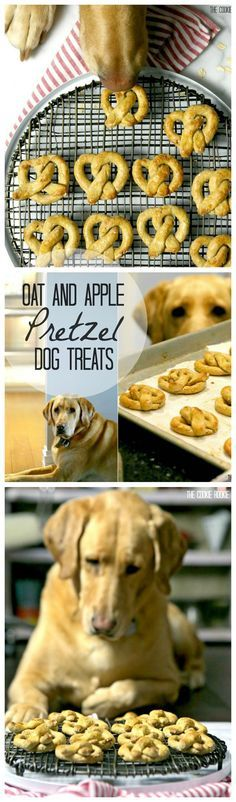 Oat and Apple Pretzel Dog Treats are a cute and simple pet treat that you can make for your pup or for a homemade gift for friends. Treat your pet to these cute and easy Oat and Apple Pretzel Dog Treats! They deserve it! Puppy Treats, Diy Dog Treats, Homemade Dog Treats, Dog Treat Recipes, Healthy Dog Treats, Dog Food Recipes, Dog Cake Recipes, Happy Healthy, Pretzel Dogs