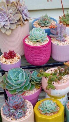 Cactus House Plants, Indoor Cactus, House Plants Decor, Cactus Decor, Cactus Art, Succulent Gardening, Succulent Terrarium, Planting Succulents, Planting Flowers