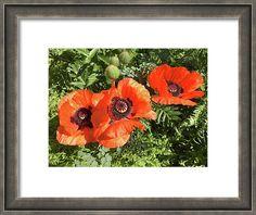 Marina Usmanskaya Framed Print featuring the photograph Spring Poppies by Marina Usmanskaya MarinaUsmanskayaFineArtPhotogtaphy,Fine Art Prints,Poppies,ArtForHome,Home Design
