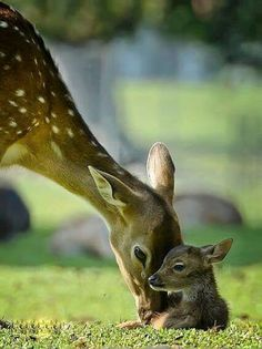 Cerbiatti Natur Tiere, Jungtiere, Süße Tiere, Niedliche Tiere, Lustige  Tiere, Katzen c17ac41507