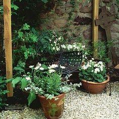 white pelargoniums and osteospermum in terra cotta on gravel White Gravel, Geraniums, Garden Inspiration, Garden Plants, Terracotta, Balcony Ideas, Places, Terra Cotta, Lugares