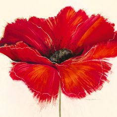 Stretched Canvas Print: Drama II by Marilyn Robertson : Poppies Tattoo, Acrylic Flowers, Red Poppies, Stretched Canvas Prints, Painting Inspiration, Flower Art, Watercolor Art, Decoupage, Canvas Art