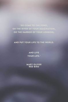 the journey mary oliver analysis